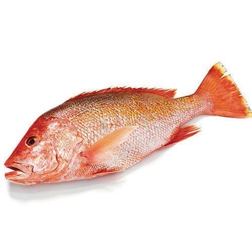 sankara fish online buy in salem